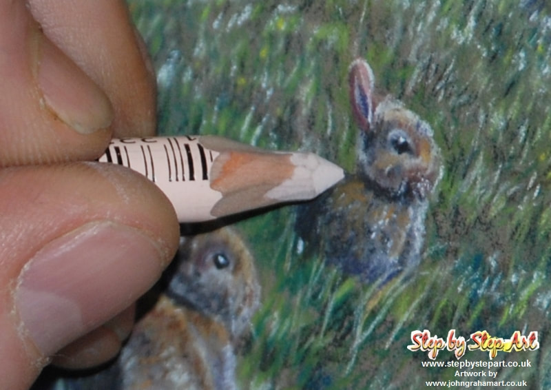 Applying highlights to a rabbit drawing with the Stabilo CarbOthello Light flesh tint 681