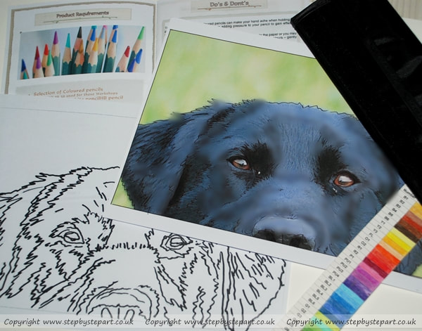 Photo of a black Labrador forehead and art workshop items