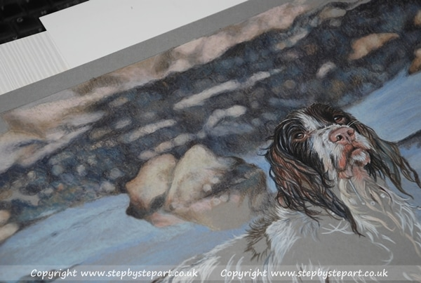 Springer spaniel head and tonal background created in Derwent Coloursoft pencils