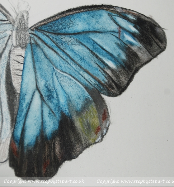 Blue Morpho Butterfly painted in Derwent Graphitint pencils