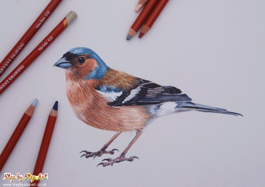 Drawing of a Chaffinch using Derwent drawing pencils completed on Bockingford grey tint paper and derwent drawing colour charts