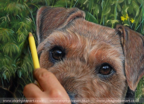 Lakeland Terrier created on pastelmat