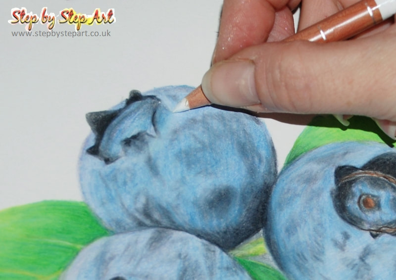 Blueberries coloured pencil drawing blending