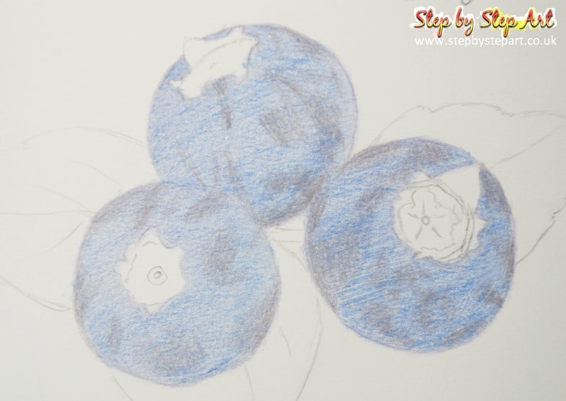 Blueberries coloured pencil drawing base layer