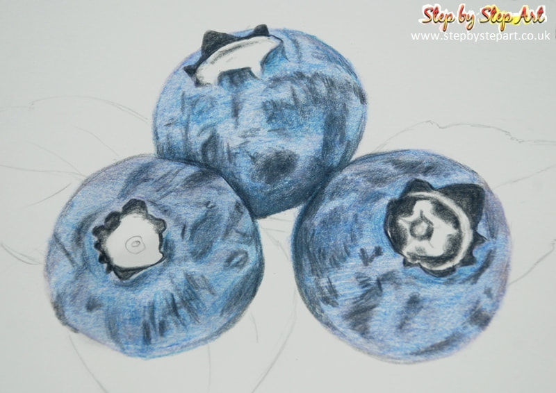 Blueberries coloured pencil drawing tonal layer