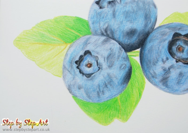 Blueberries coloured pencil drawing creating leaves