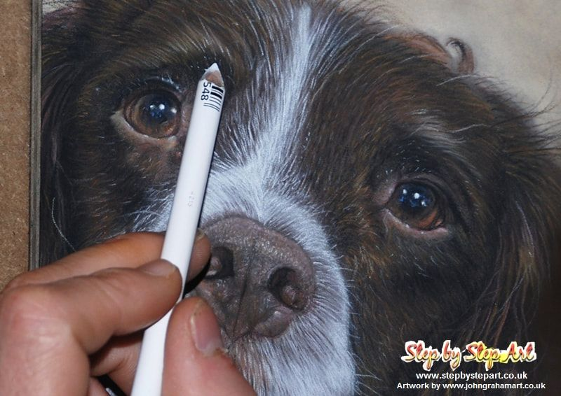 applying fine white fur on a pastel pencil springer spaniel