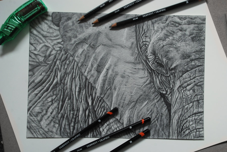 Drawing an African Elephant in Derwent Graphic pencils