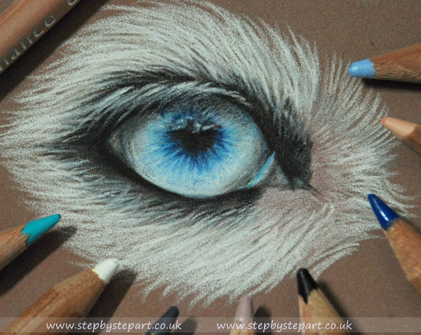 Blue Border collie eye created in Caran dache Luminance pencils on brown Clairfontaine Pastelmat