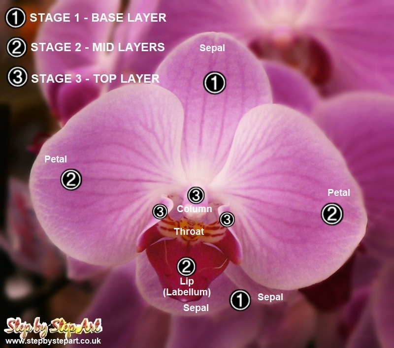 Photograph showing the structure of a pink orchid flower