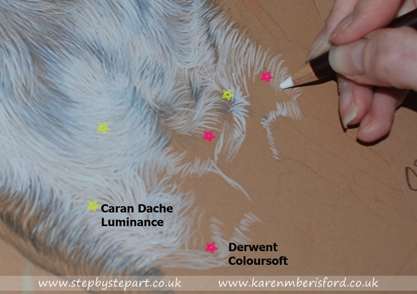 White Derwent coloursoft pencil being applied to tan Ursus paper on a brindle boxer dog's chest