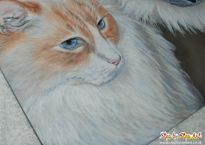 Ginger and white ragdoll cat acrylic painting on ampersand pastelbord